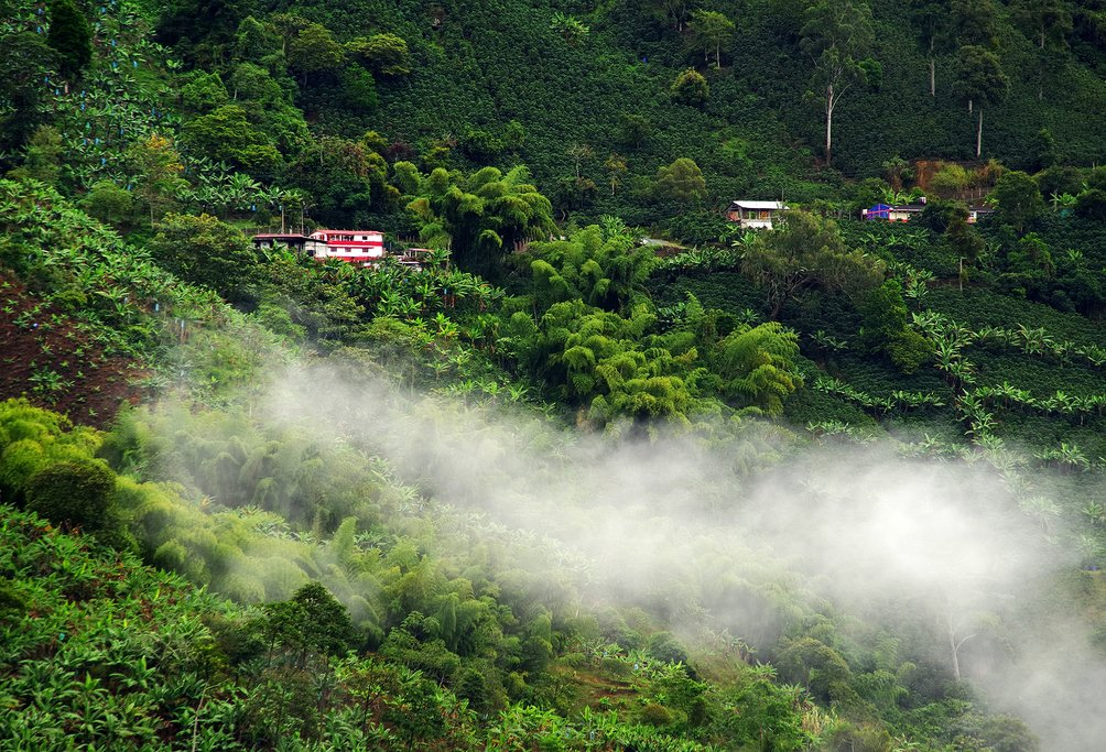 How to Get to Colombia's Coffee Region