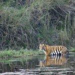 You might spot a tiger on the river safari