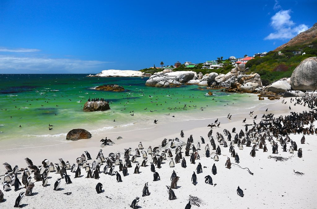 Penguins at Boulders Beach, Simon's Town