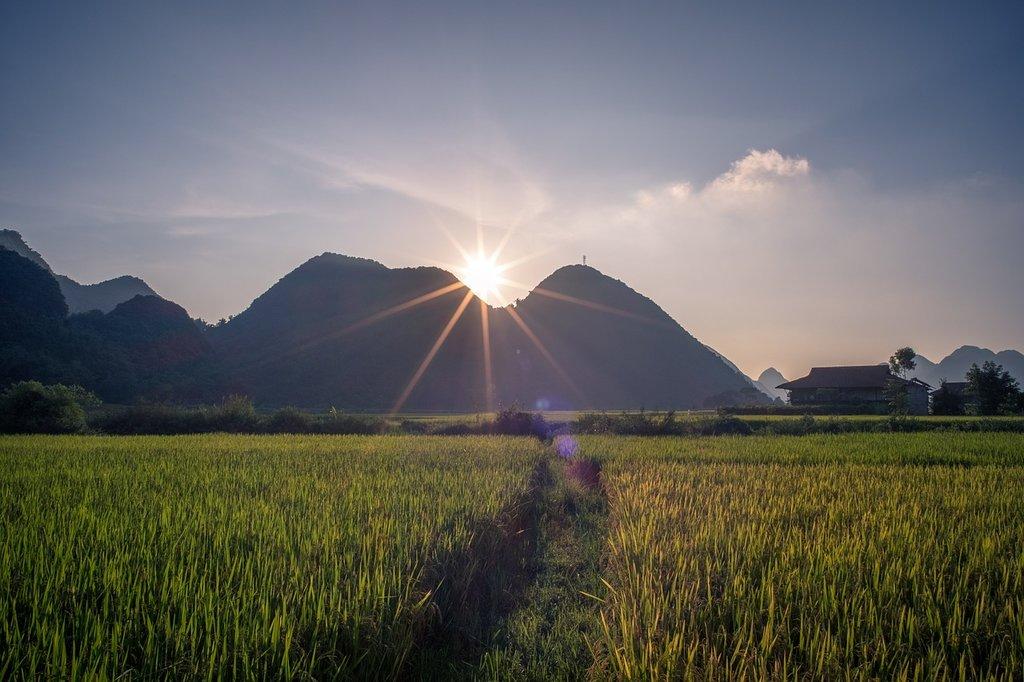Vietnam's rice paddies make for stunning country scenery