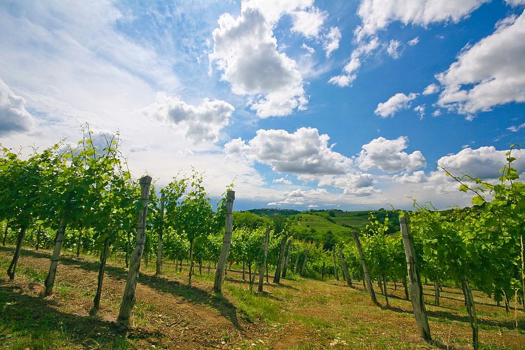 Vineyard territory