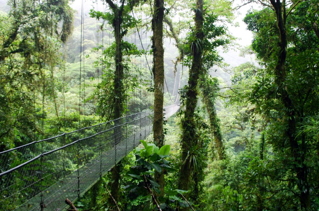 Suspension bridge in the Cloud Forest