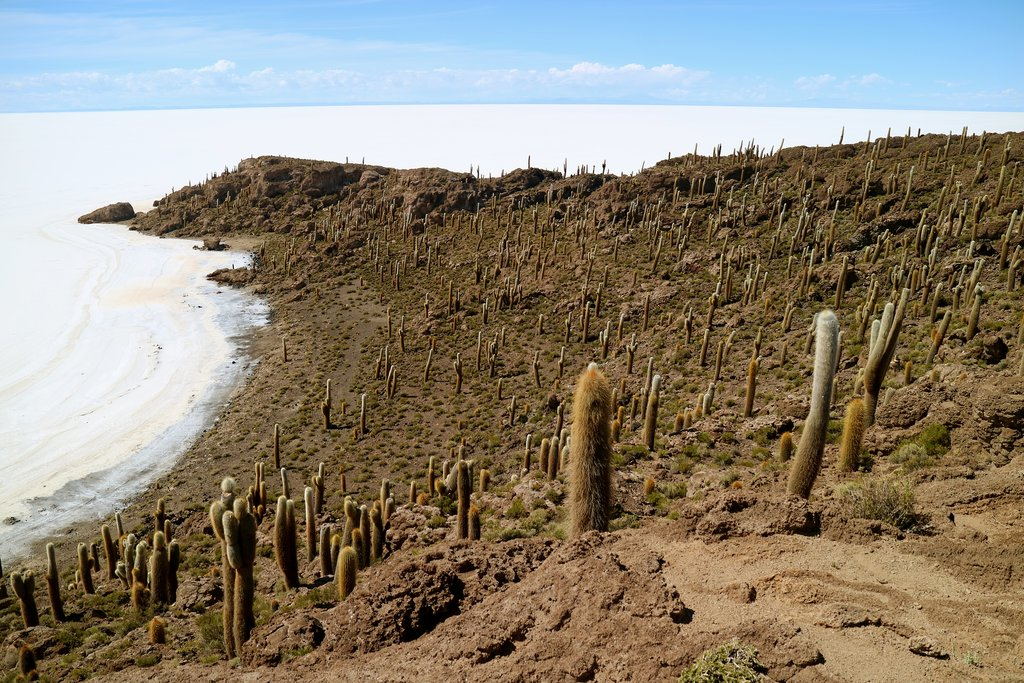 Isla Incahuasi is famous for its enormous cacti and the stunning views of the salt flats