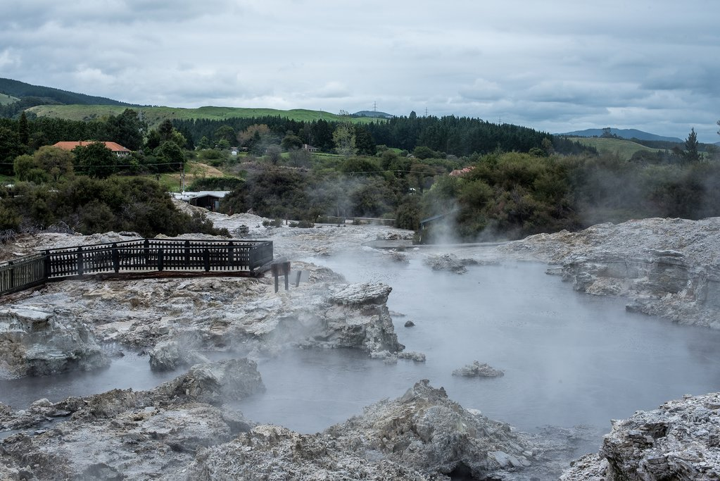 Steam rises from the geothermal pools at Hell's Gate with trees, rolling hils and a green landscape in the space beyond