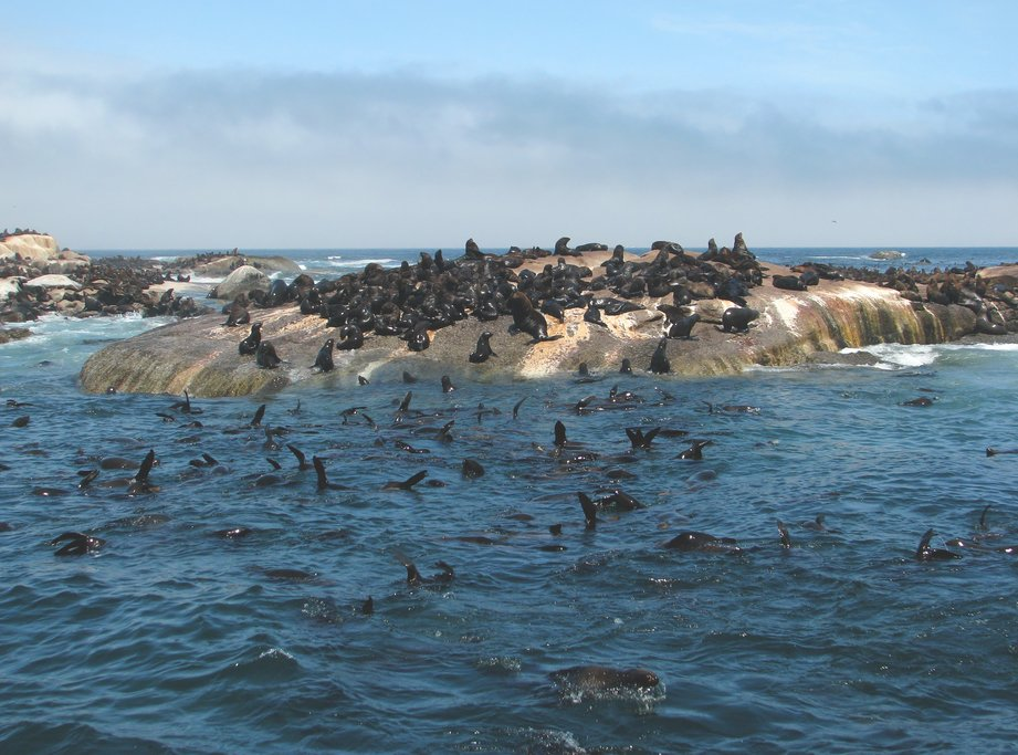 Seal Island in Hout Bay