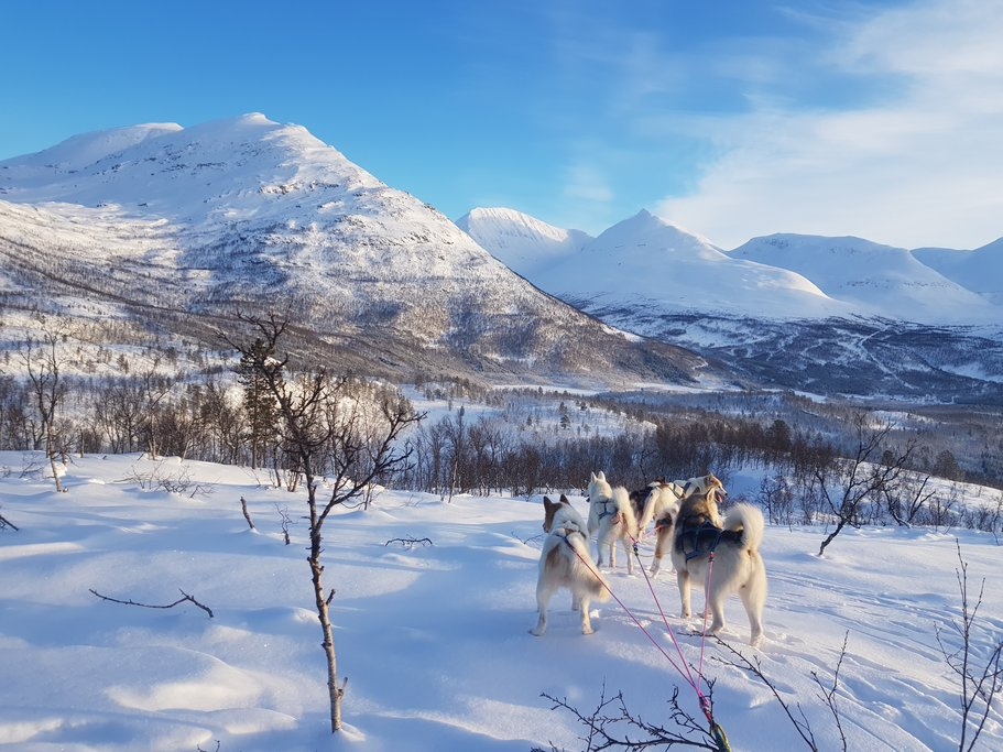 Dogsled through the Arctic wilderness near Tromsø.