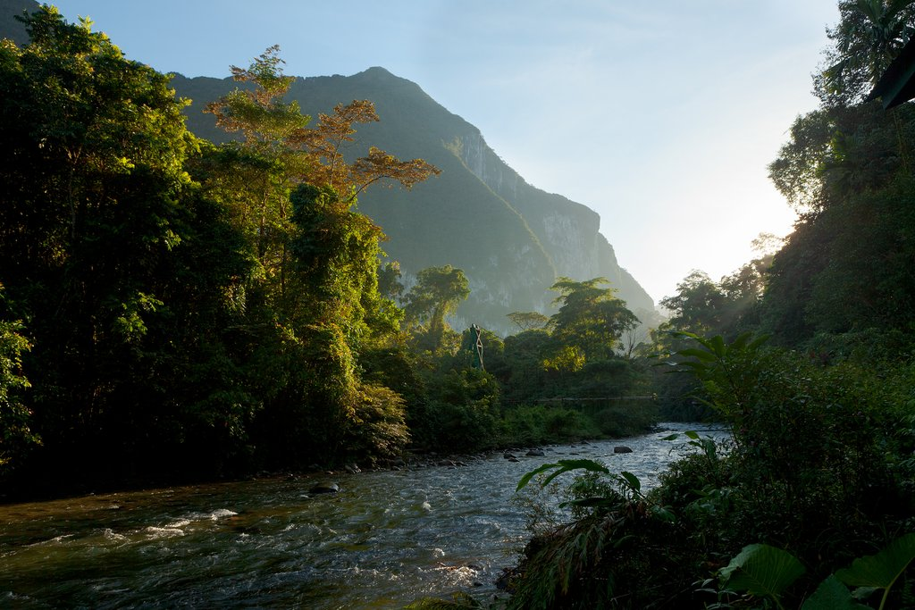 ush forest scene at morning sunrise in Gunung Mulu