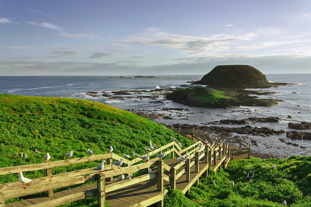 Australia - Phillip Island - The Nobbies