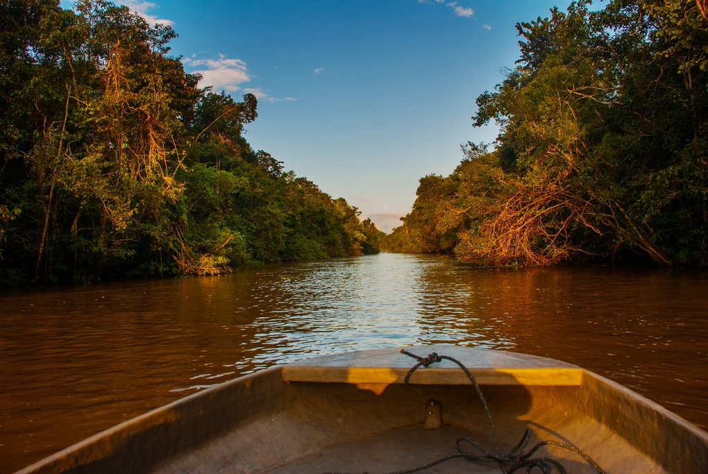 Search for wildlife on a river safari