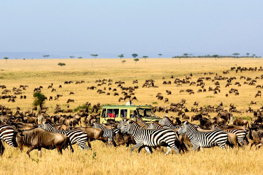 Zebras and wildebeest in the Serengeti