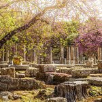Flowers bloom in Ancient Olympia