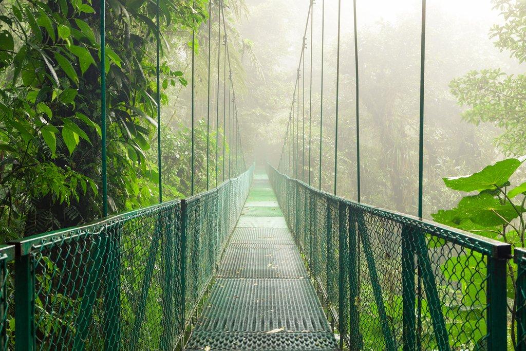 Hanging bridge in the Monteverde Cloud Forest