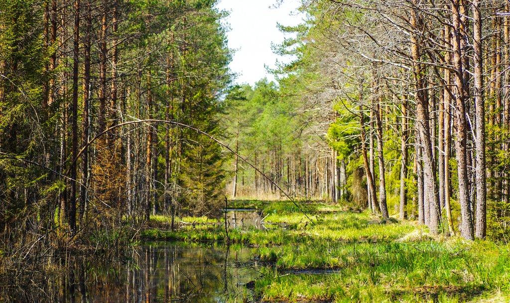 Bogs of Soomaa National Park