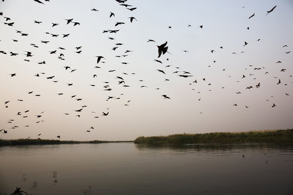 Birds over the river