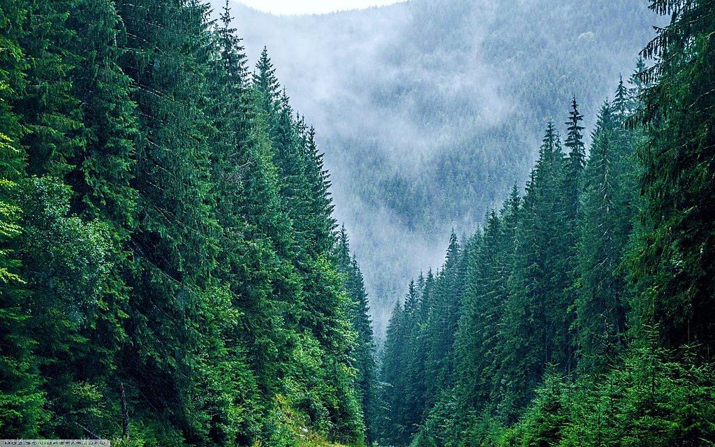 Siriu Forest