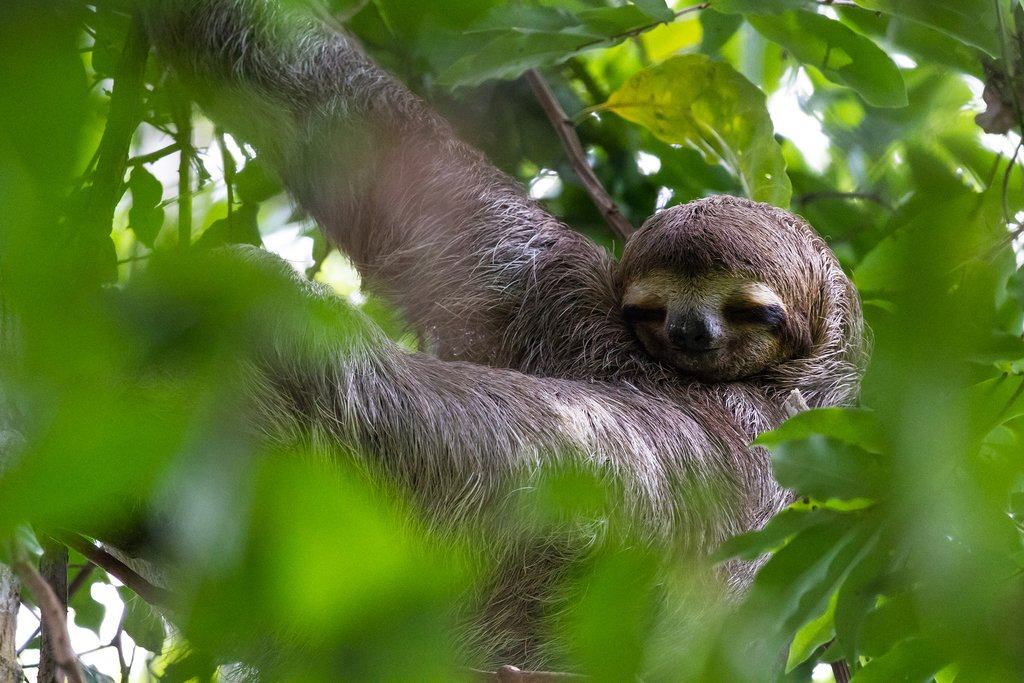 Be on the lookout for sloths