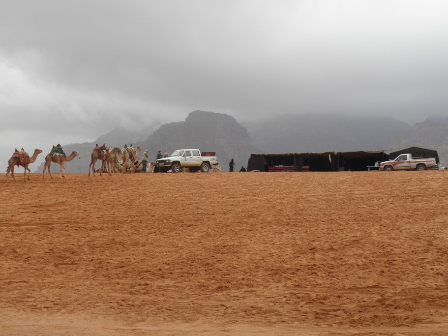 Camels and vehicles in Wadi Rum desert