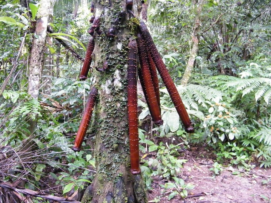 The rich plant life of the Amazon.
