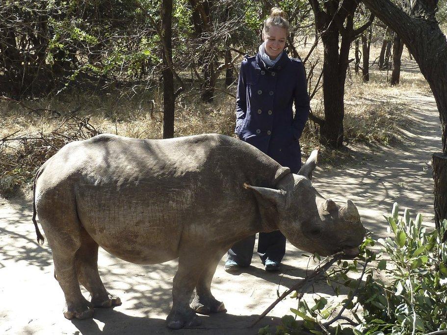 A rhino in Moholoholo Rehabilitation Center