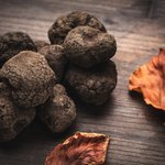 On the hunt for wild truffles