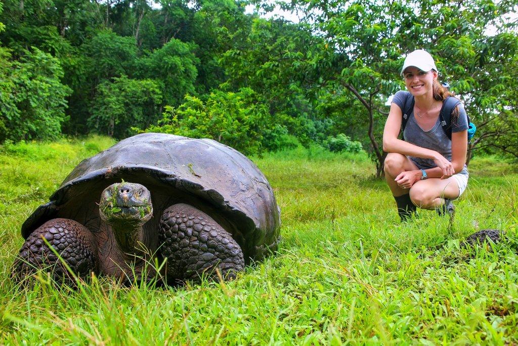 A giant Galapagos tortoise