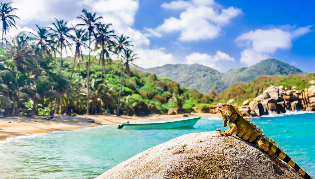 Lush jungle, white beaches, and diverse wildlife in Tayrona National Park.