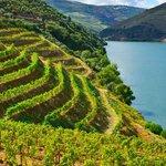 Vineyards on the Pelješac peninsula