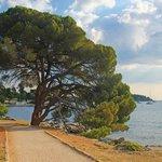 A coastal path near Rovinj