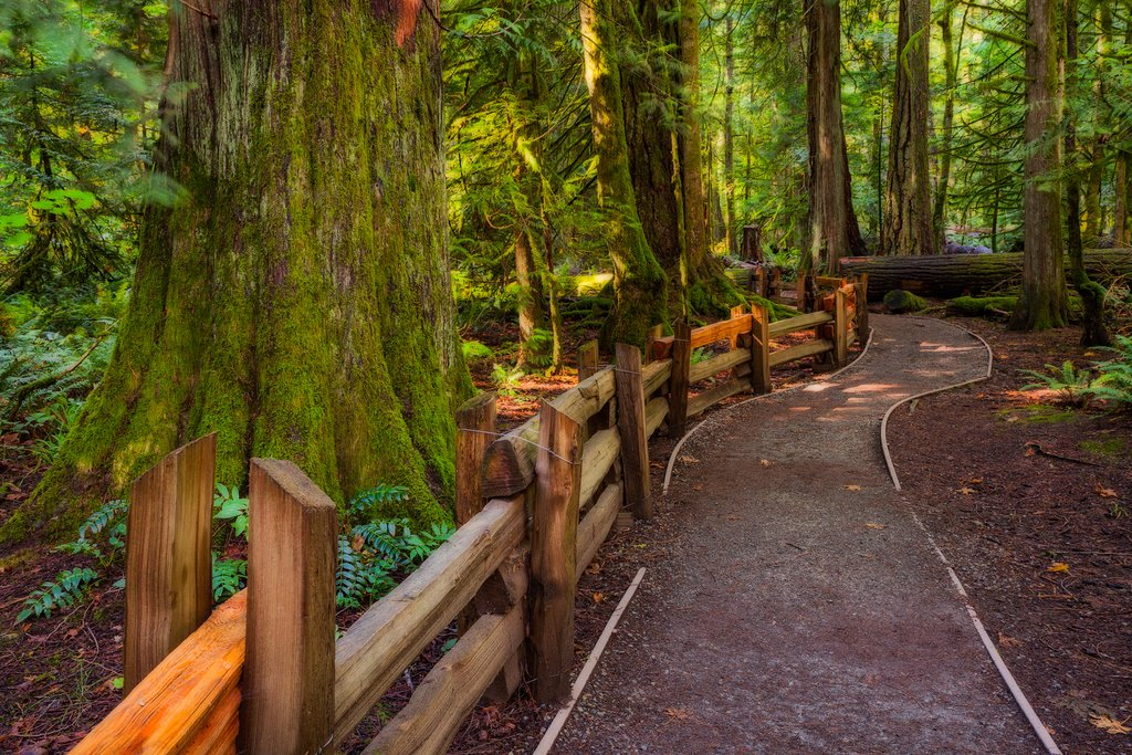 Walking trail through Cathedral Grove
