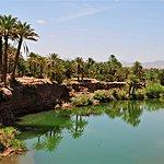 Draa valley palm grove