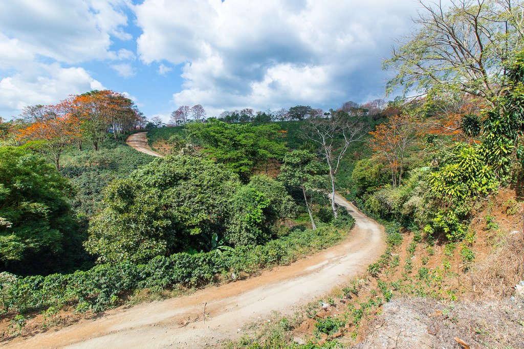 Pedal down Costa Rica's country roads on a bike tour