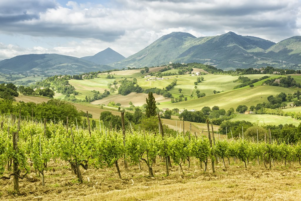 Marche's stunning wine country.