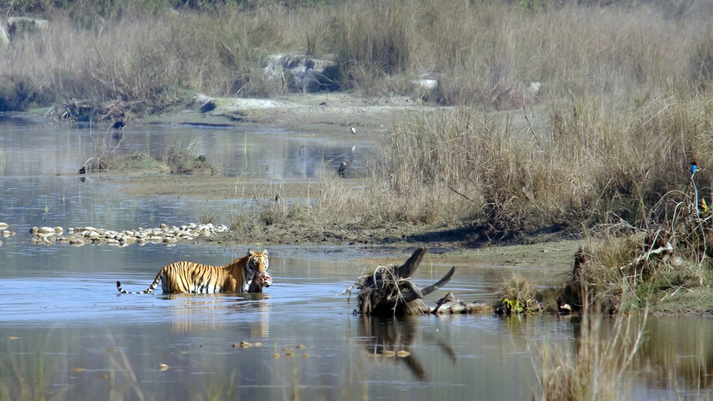 How to Get from Kathmandu to Bardia National Park