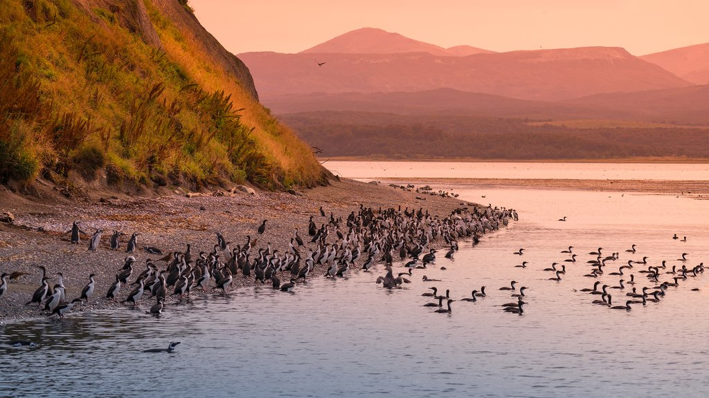 Watch a stunning sunset in the Beagle Channel.