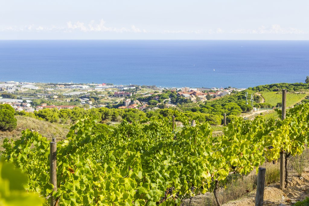 Many of the region's vineyards come with Mediterranean views