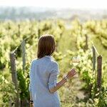 Enjoy a Wine Tasting at Different Vineyards