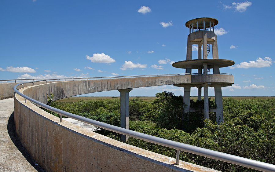 Look out over the Everglades from this observation tower