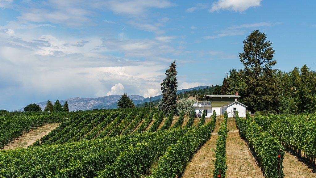 A vineyard in Penticton