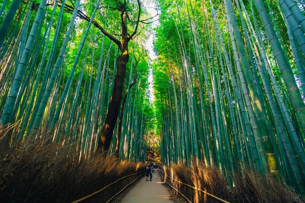 The Arashiyama bamboo forest