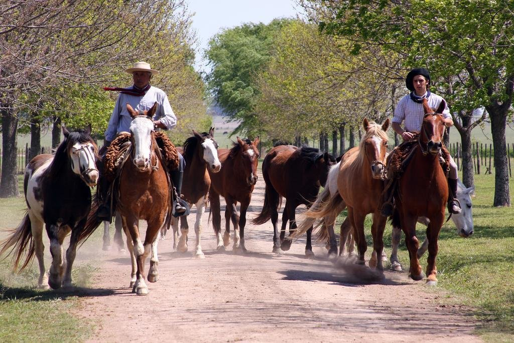 The Gaucho people with a herd of horses