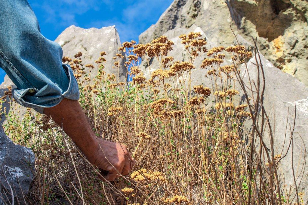 Wild Herbs Growing in Greece