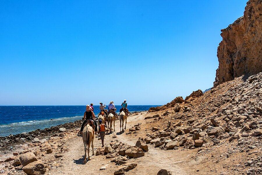 Ride camels in Abu Galum