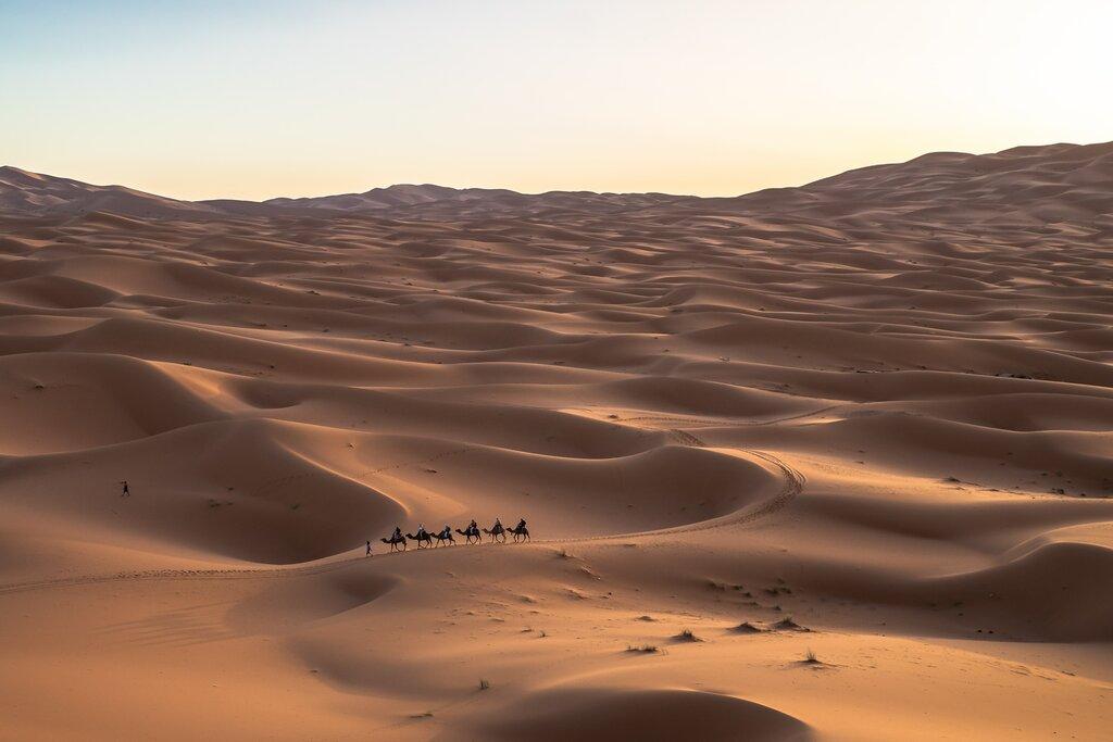 Camel Caravan near Merzouga