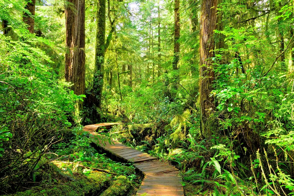 Hiking through coastal rainforest in the Pacific Rim