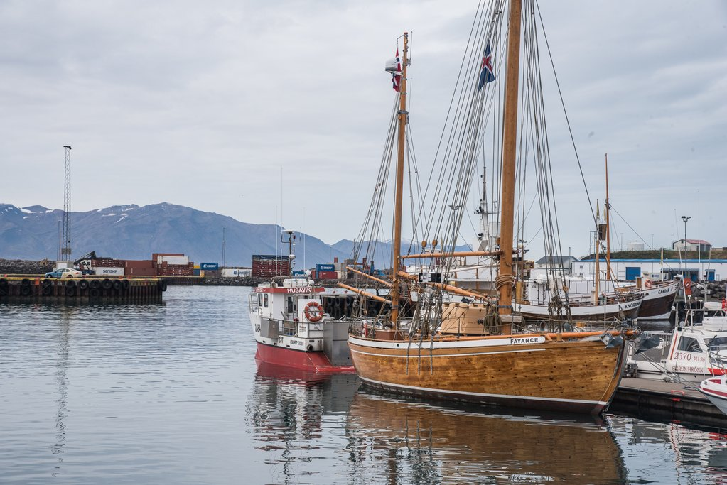 Join a whale watching trip in Husavik