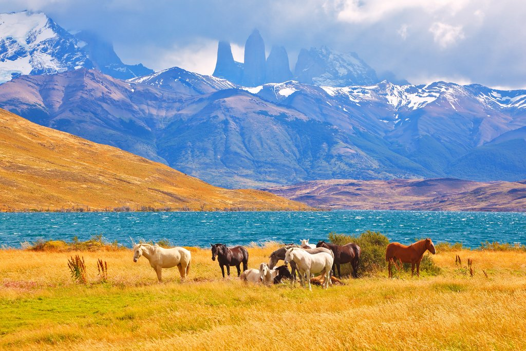 Wild horses in Torres del Paine
