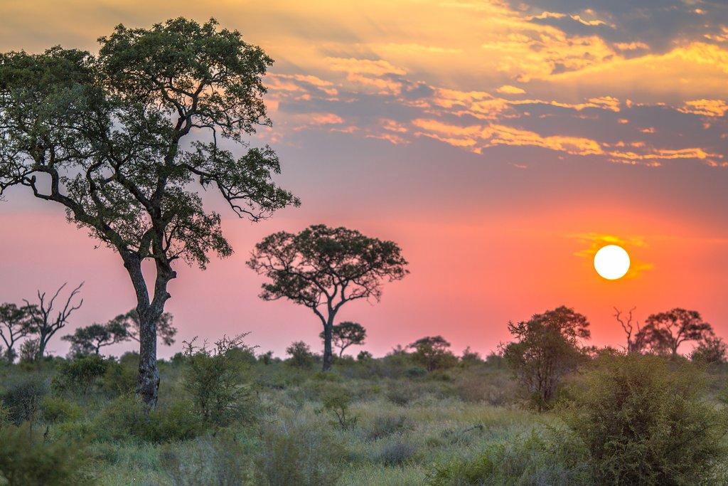 Kruger plains