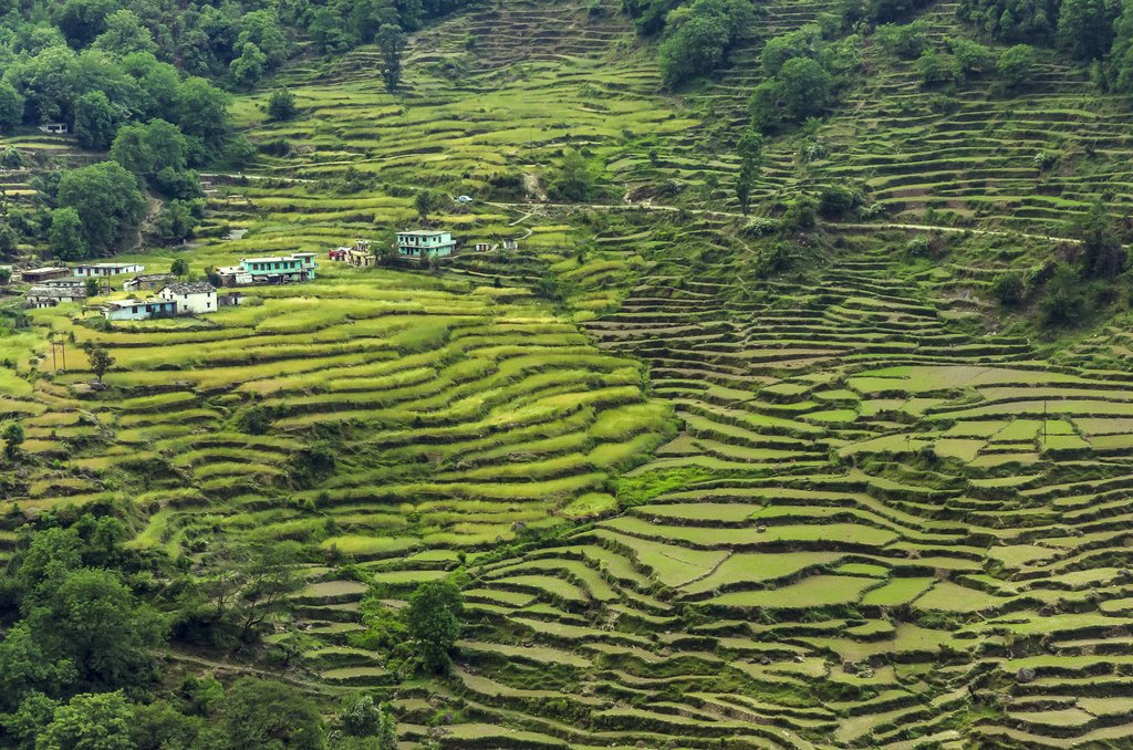 Pass through some rice paddies on today's route