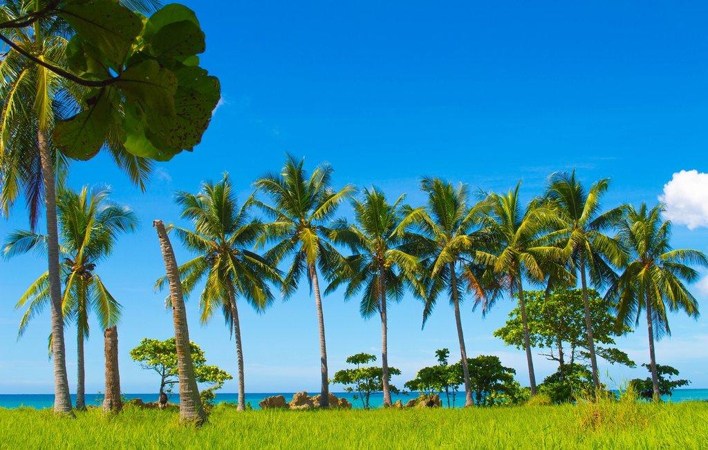 Palm trees in Santa Teresa, Costa Rica