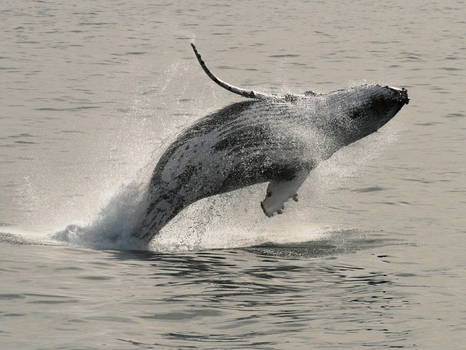 Go whale watching between May & November